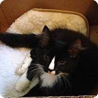 Adopt A Pet :: Pumpkin - Port Republic, MD