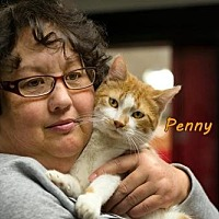 Adopt A Pet :: Penny - Albuquerque, NM