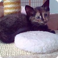 Adopt A Pet :: Toyka - Kirkwood, DE
