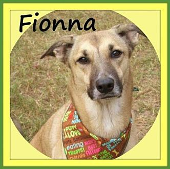 Shepherd (Unknown Type) Mix Dog for adoption in Raleigh, North Carolina - Fionna
