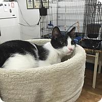 Adopt A Pet :: Tillie - Speonk, NY
