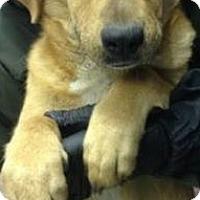 Adopt A Pet :: Fruitcakes - Pompton Lakes, NJ