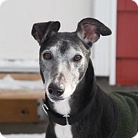 Adopt A Pet :: Lexington - Ware, MA