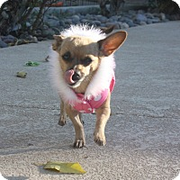 Adopt A Pet :: Charlee - Henderson, NV