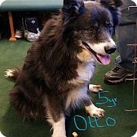 Adopt A Pet :: OTTO - Gustine, CA