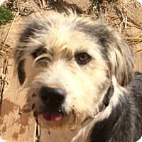 Adopt A Pet :: Faye - Lexington, KY