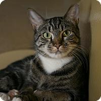 Adopt A Pet :: Sal - Worcester, MA
