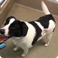 Adopt A Pet :: Jax 7428 - Columbus, GA
