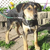 Adopt A Pet :: Gaby - West Chicago, IL