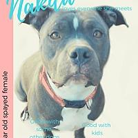 Adopt A Pet :: Nakita - Des Moines, IA