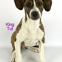 Adopt A Pet :: King Tut - Bloomington, MN