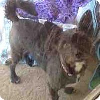 Adopt A Pet :: Buddy - Loudonville, NY