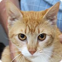Adopt A Pet :: Liz Lemon - Sarasota, FL