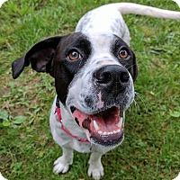 Adopt A Pet :: Penelope - Lisbon, OH
