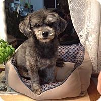 Adopt A Pet :: Trudy - Surrey, BC