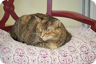 Calico Cat for adoption in Trevose, Pennsylvania - Dutchess