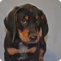 Adopt A Pet :: Sport - Conway, AR