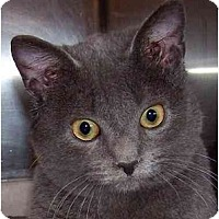 Adopt A Pet :: Dolce - Annapolis, MD