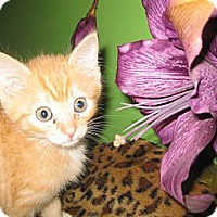 Adopt A Pet :: Olay - Clearfield, UT