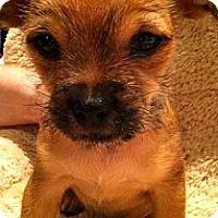 Adopt A Pet :: Solo - Phoenix, AZ