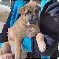 Adopt A Pet :: Cabo - Scottsdale, AZ