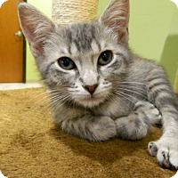 Adopt A Pet :: Willis - The Colony, TX
