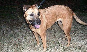 Terrier (Unknown Type, Medium)/German Shepherd Dog Mix Dog for adoption in Pleasant Grove, California - Zoe