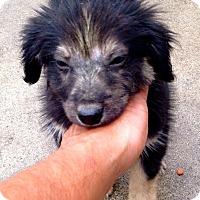 Adopt A Pet :: Kendrick Lamar