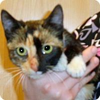 Adopt A Pet :: Mulan - Wildomar, CA