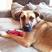 Adopt A Pet :: Geneva - Seattle, WA