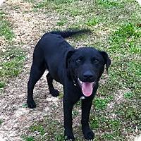 Adopt A Pet :: Sam - Glastonbury, CT