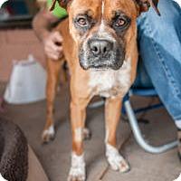 Adopt A Pet :: Sly - Oceanside, CA