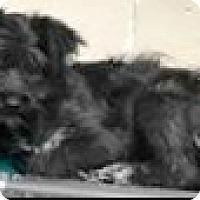 Adopt A Pet :: Lulu - Boulder, CO
