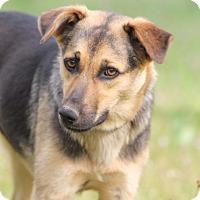 Adopt A Pet :: Hannah - kennebunkport, ME