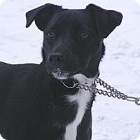 Adopt A Pet :: Vicky - Rigaud, QC