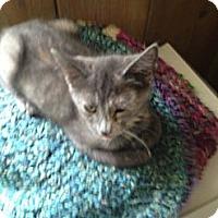 Adopt A Pet :: Madi Gras - Westfield, MA