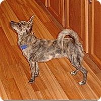 Adopt A Pet :: Sherlock - Alliance, NE