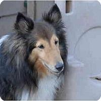 Adopt A Pet :: Hunter - Ft. Myers, FL