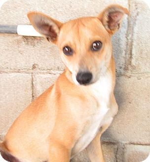 Terrier (Unknown Type, Medium) Mix Dog for adoption in San Diego, California - Daley