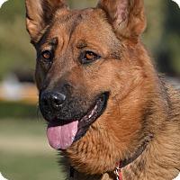 Adopt A Pet :: Sadie - Altadena, CA