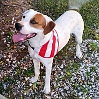 Hound (Unknown Type) Mix Dog for adoption in Lake Placid, Florida - Rizo