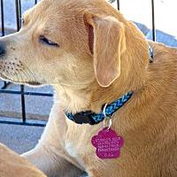 Adopt A Pet :: Salina - San Diego, CA