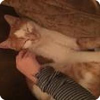 Adopt A Pet :: Finsten - Manchester, CT