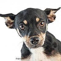 Adopt A Pet :: Sissy - Tustin, CA