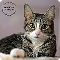 Adopt A Pet :: Sasha - Lyons, NY