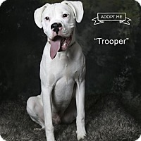 Adopt A Pet :: Trooper - Acton, CA
