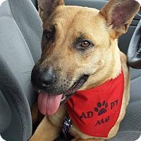 Adopt A Pet :: Kween - ST LOUIS, MO