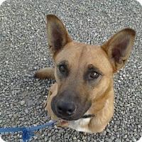 Adopt A Pet :: Timber (Courtesy Listing) - Estes Park, CO