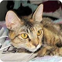 Adopt A Pet :: Apricot - Alexandria, VA
