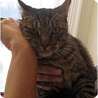 Adopt A Pet :: Scarface - New York, NY